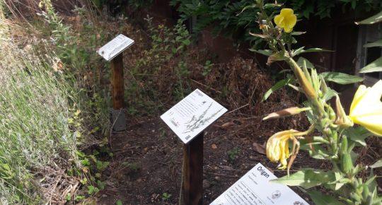 Notre Jardin aromatique rénové au pied du Château !