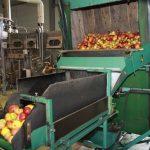 les pommes pressées de JUNATUR à Dossenheim / Zinsel